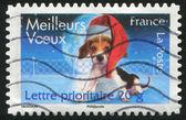 France Dog — Stock Photo