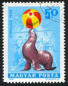 Seal balancing ball in circus — Stock Photo