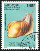East African land snail — Stock Photo