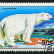 Polar bear — Stock Photo #9472805