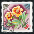 Flower Tagetes faula - Stock Photo