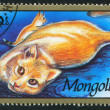Cat stamp printed by Mongolia - Stockfoto