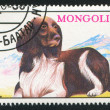 Dog stamp printed by Mongolia — Stock Photo