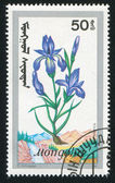 Iris sibrica — Stock Photo