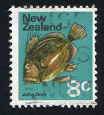 Fish John Dory — Stock Photo