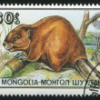 MONGOLIA - CIRCA 1989: stamp printed by Mongolia, shows Beavers, circa 1989 — Foto Stock #9638989