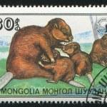 Beavers with calf — Stock Photo #9638995