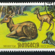 Stock Photo: Moschus Moschiferus