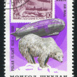 Graf Zeppelin and polar bear — Stock Photo