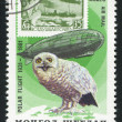 Постер, плакат: Graf Zeppelin and snowy owl