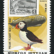 Graf Zeppelin and puffin - Stock Photo