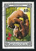Two brown bears — Stock Photo