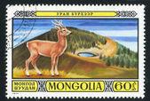 Mongolia deer — Stock Photo