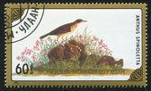 North American bird Species — Stock Photo