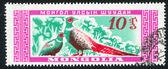 Two Birds pheasant — Stock Photo
