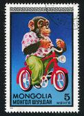 Chimpanzee on bicycle — Stock Photo