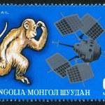 Monkey and explorer — Stock Photo