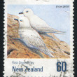 Snow petrel — Stock Photo