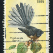 Fantail — Stock Photo #9703409