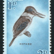 Bird kingfisher kotare - Stock Photo