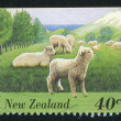 Flock of Sheep and Lambs — Stock Photo