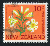 Stamp printed by New Zealand Lily — Stock Photo