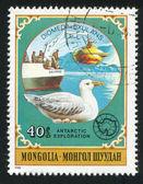 Albatross — Stock Photo
