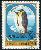 Penguins — Stock Photo