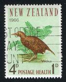 New Zealand Kiwi — Stock Photo