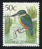 Kingfisher — Zdjęcie stockowe