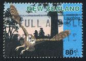 Новозеландская сова — Стоковое фото