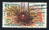 Sea urchin — Stock Photo