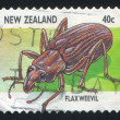 Stock Photo: Flaxweevil