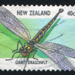 Stock Photo: Giant dragonfly