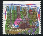 Plantation d'arbustes et arbres indigènes — Photo