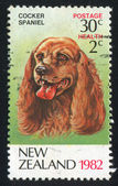 Dog cocker spaniel — Stock Photo