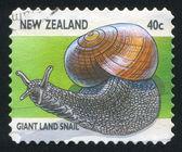 Giant Land Snail — Stock Photo