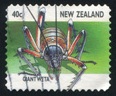Giant weta — Stock Photo