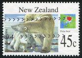 Kutup ayısı — Stok fotoğraf