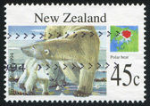 Polar bear — Foto Stock