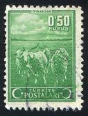 Mohair goats — Stock Photo