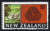 New Zealand Sheep — Stock Photo
