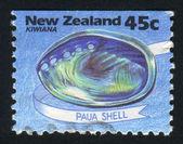 Paua Shell — Stock Photo
