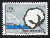 Pamuk ve gemi — Stok fotoğraf