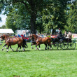 Carriage drive show in strzegom at HSBC FEI World Cup 2009 — Foto Stock