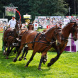 Carriage drive show in strzegom at HSBC FEI World Cup 2009 — Stockfoto