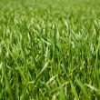 Growing green grass at springtime — Stock Photo
