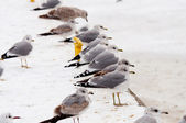Seagull at winter time — Stock Photo