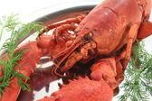莳萝熟的龙虾 — 图库照片