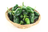 Fresh raw Pimientos in a bowl — Stock Photo